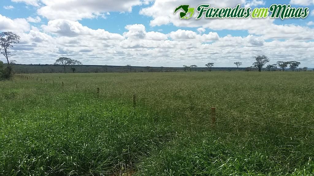 Fazenda para pecuária no município de São João da Ponte