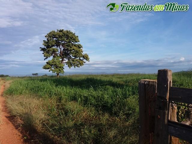 Fazenda com boa localização na beira do asfalto