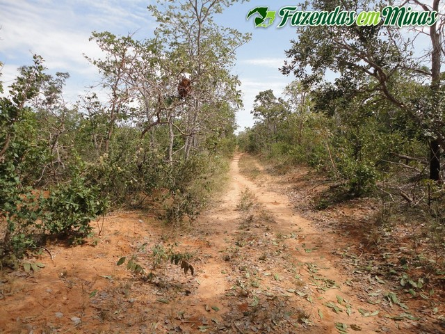 Fazenda para reserva ou eucalipto