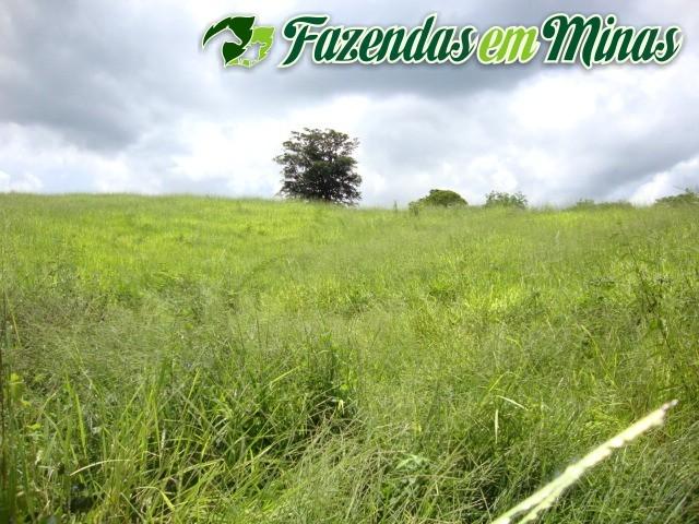 Cód.161- Francisco Sá - MG