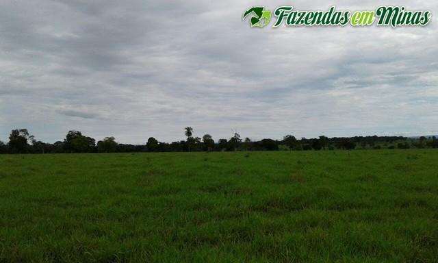 Fazenda pecuária