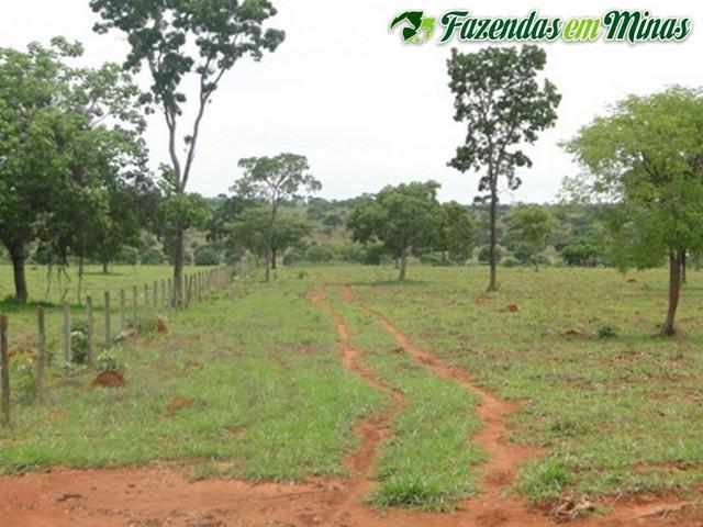 Fazenda para pecuária de leite, corte e reflorestamento.