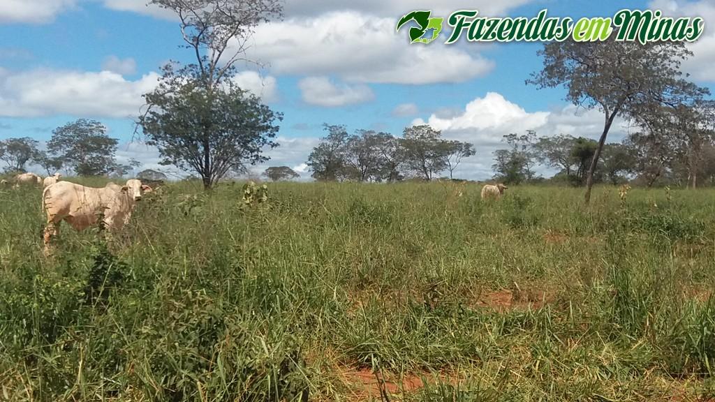 Fazenda para pecuária.