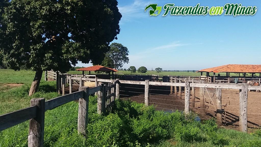 Excelente fazenda as margem do rio São Francisco