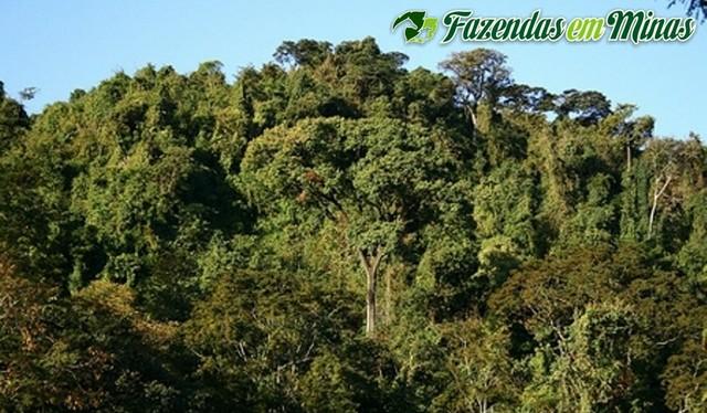 Área para reserva ou compensação ambiental