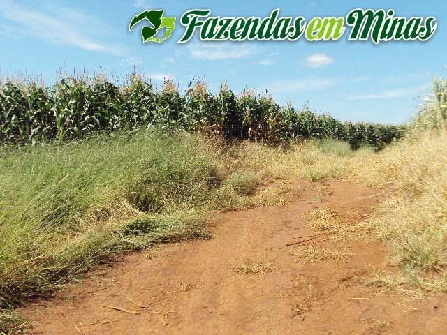 Cód.403- Monte Santo de Minas - MG
