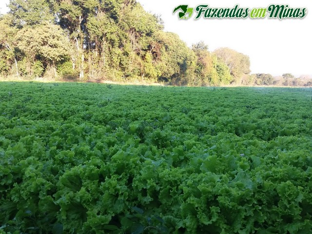 Fazenda para irrigação