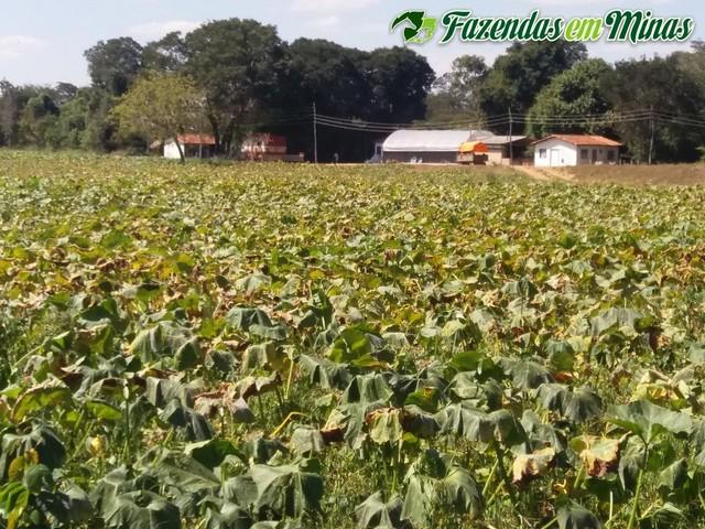 Fazenda para para pecuária e irrigação