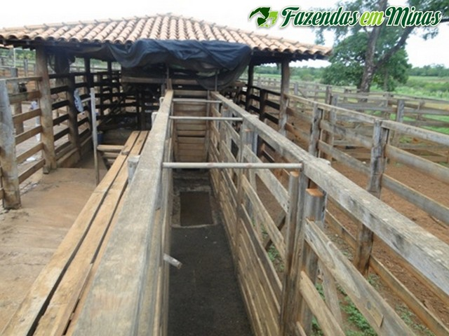 Fazenda para pecuária de leite, corte e reflorestamento