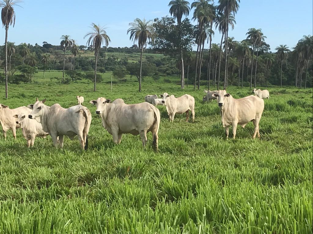 Novas fazendas cadastradas
